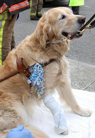 Kahraman köpekler ve hikayeleri