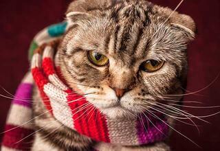 Kedileri soğuktan nasıl koruyabiliriz