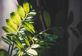 Gün ışığı almayan evlerde yetiştirilebilecek bitkiler