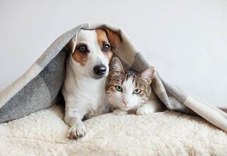 Sevdiklerinizi kedi veya köpek sahiplenmeye ikna etmek için yapmanız gerekenler