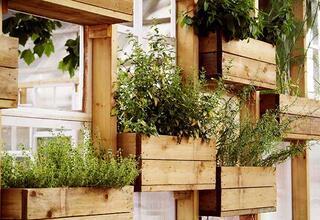 Duvarınızı dikey bir bahçeye dönüştürmenin püf noktaları