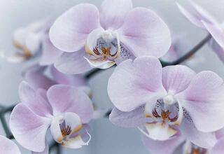 Kış mevsiminde çiçek bakımı nasıl olmalı