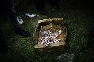 Son dakika... Ankarada köpeklerin öldürülmesine hapis istemi