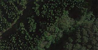 Ormanda buldular