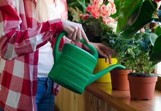 Ev bitkilerini canlandıran karışım