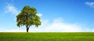 Ağaçlar bizi izliyor olabilir mi