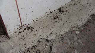 Mahalleyi istila eden böcekler incelenecek