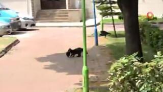 Kedinin avladığı yavruyu kurtaramadılar