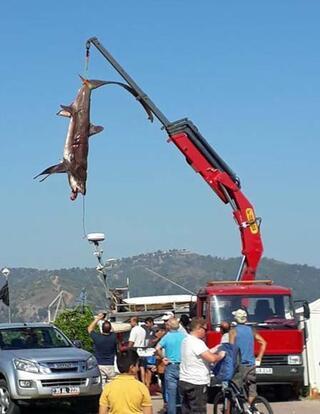 Muğlada yakalandı Vinçle kaldırdılar...