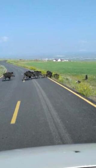 Sürü halinde geldiler Bir köy şokta...
