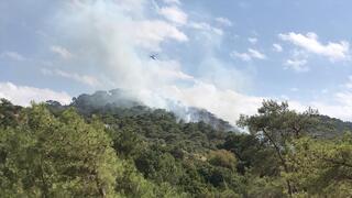 SON DAKİKA Bodrumda orman yangını