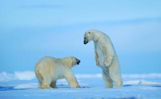 Ölmenin yasak olduğu ada Svalbard