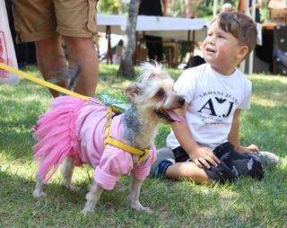 Sahipli köpekler, sokak hayvanları için yarıştı