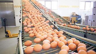 Yumurtacılar yeni pazar arıyor