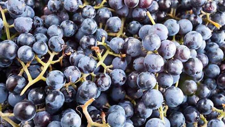 Yaz meyvelerinden yapılan reçel tarifleri