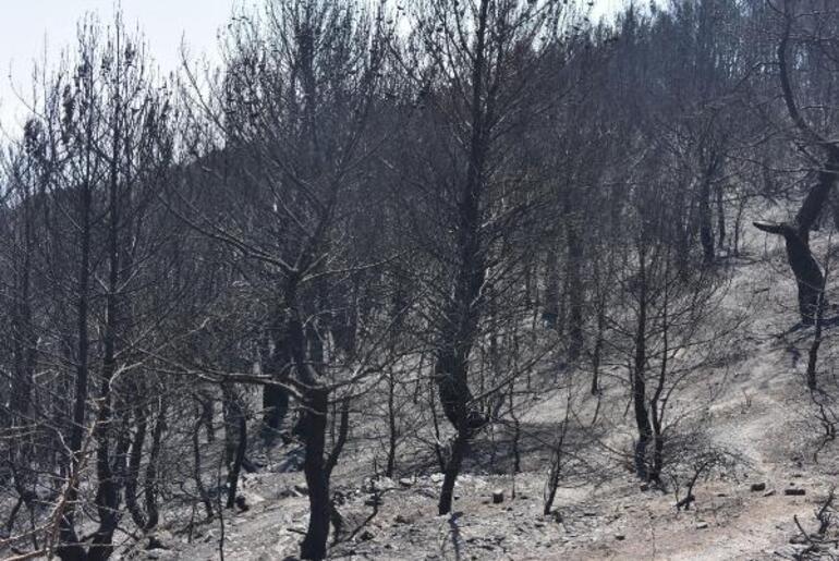 Karabağlardaki yangından geriye kapkara bir tablo kaldı
