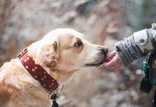 Köpeklerin ısırmasının önemli nedenleri