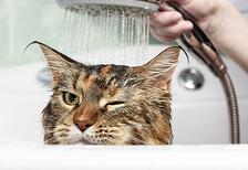Kedilerinize uygulamamanız gereken davranışlar