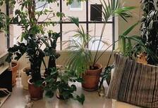 Bitkilerin yaprakları nasıl temizlenir?