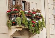 Balkonda kullanabileceğiniz çiçekler