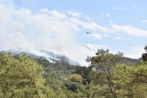 SON DAKİKA! Bodrum'da orman yangını
