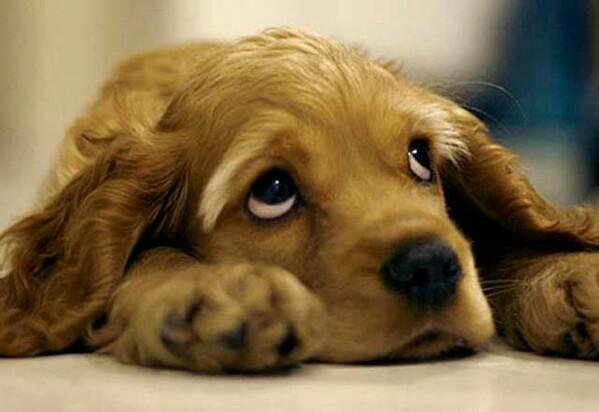 Köpekleri üzen davranışlar