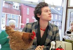 Harry Stylesın rol arkadaşı bir tavuk