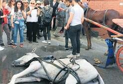 Atlar yere yığılsa da fayton turu sürüyor
