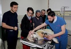 Koca yürekli veteriner hekimler Dünyada ilk kez…