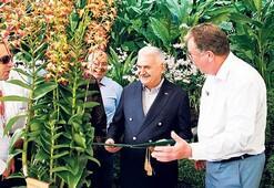 Artık dikili bir  orkidemiz var