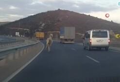 Trafikte dörtnala koşan at görenleri hayrete düşürdü