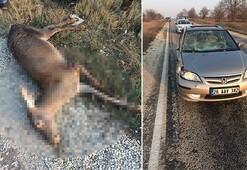 Otomobilin çarptığı geyikler telef oldu