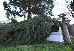 Son dakika: O ilimizde çok şiddetli fırtına Ağaçlar devrildi, çatılar uçtu...