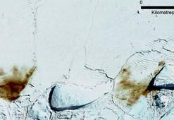 Antarktikada buz tabakası parçalandı, binlerce yavru penguen boğuldu