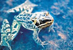 Toros kurbağası hangi ilimizde yaşıyor 5 Haziran ipucu sorusu