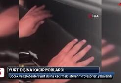 Türkiyeden topladıkları böcek ve kelebekleri yurt dışına kaçırmak isteyen Profesörler yakalandı