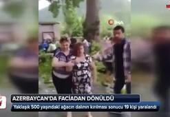 Azerbaycan'da 500 yaşındaki ağacın dalı kırıldı, 19 kişi yaralandı