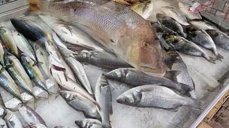 Oltayla 12 kiloluk balık yakaladı!